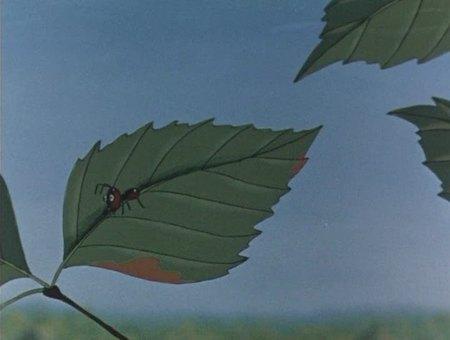Здесь можно посмотреть онлайн и скачать мультфильм Путешествие муравья.